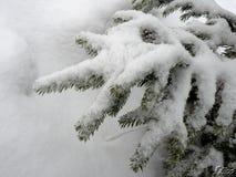 Χιόνι σε έναν κλάδο Στοκ εικόνες με δικαίωμα ελεύθερης χρήσης