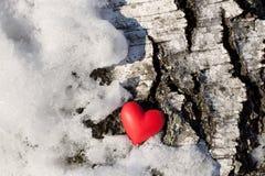 χιόνι σημύδων Στοκ Φωτογραφίες