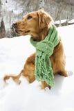 χιόνι σκυλιών στοκ φωτογραφία με δικαίωμα ελεύθερης χρήσης