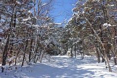 Χιόνι στα δάση Στοκ Εικόνες