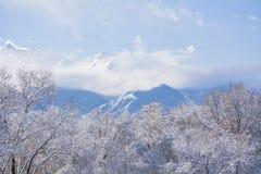 Χιόνι στα δέντρα με τη θέα βουνού Στοκ εικόνες με δικαίωμα ελεύθερης χρήσης