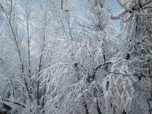 Χιόνι στα δέντρα Στοκ Φωτογραφίες