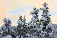 Χιόνι στα δέντρα έλατου με έναν συμπαθητικό ζωηρόχρωμο ουρανό στο υπόβαθρο Στοκ εικόνα με δικαίωμα ελεύθερης χρήσης