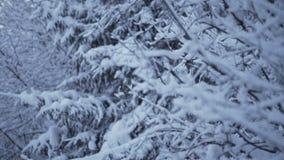 Χιόνι στα δέντρα έλατου Χειμερινά δέντρα χιονιού απόθεμα βίντεο