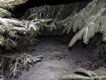 Χιόνι στα δέντρα πεύκων Στοκ Εικόνες
