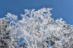 Χιόνι στα δέντρα Στοκ φωτογραφία με δικαίωμα ελεύθερης χρήσης