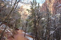 Χιόνι στα φαράγγια Zion! Γιούτα στοκ εικόνες