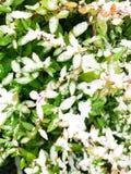 Χιόνι στα φύλλα στοκ εικόνες με δικαίωμα ελεύθερης χρήσης