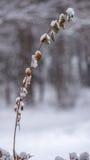 Χιόνι στα φύλλα σε έναν μόνο κλάδο Στοκ φωτογραφία με δικαίωμα ελεύθερης χρήσης