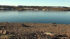 Χιόνι στην ακτή και το νερό επιφάνειας του αρκτικού ωκεανού στη νέα γη απόθεμα βίντεο