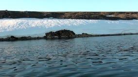 Χιόνι στην ακτή και το νερό του αρκτικού ωκεανού στη νέα γη απόθεμα βίντεο