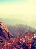 Χιόνι στην κόκκινη άνθιση του θάμνου ερείκης στον απότομο βράχο στο πάρκο Λοφώδης επαρχία με το μακροχρόνιο σύνολο κοιλάδων της ο στοκ φωτογραφίες με δικαίωμα ελεύθερης χρήσης