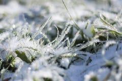 Χιόνι στη χλόη Στοκ Εικόνες