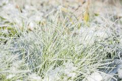 Χιόνι στη χλόη Στοκ φωτογραφία με δικαίωμα ελεύθερης χρήσης