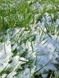 Χιόνι στη χλόη Στοκ εικόνες με δικαίωμα ελεύθερης χρήσης