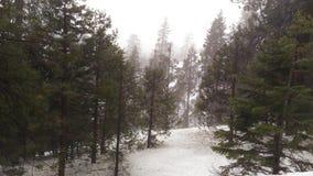 Χιόνι στις δασικές ΗΠΑ Στοκ Εικόνα