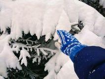 Χιόνι στις βελόνες του πεύκου στοκ εικόνες
