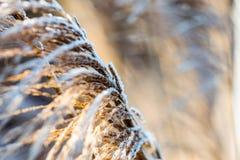 Χιόνι στον κάλαμο Στοκ εικόνα με δικαίωμα ελεύθερης χρήσης