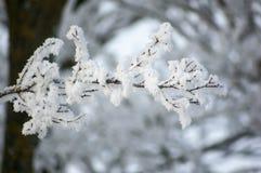 Χιόνι στον κλάδο με το δέντρο στο θολωμένο υπόβαθρο στοκ εικόνες