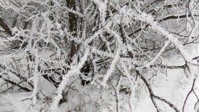 Χιόνι στον κλάδο όμορφο δάσος ανασκόπησης 33c ural χειμώνας θερμοκρασίας της Ρωσίας τοπίων Ιανουαρίου Στοκ Εικόνα