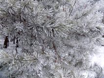 Χιόνι στον κλάδο όμορφο δάσος ανασκόπησης 33c ural χειμώνας θερμοκρασίας της Ρωσίας τοπίων Ιανουαρίου Στοκ φωτογραφία με δικαίωμα ελεύθερης χρήσης