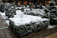 Χιόνι στους θάμνους στο πάρκο πόλεων στοκ εικόνα