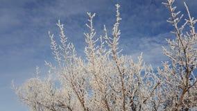 Χιόνι στους κλάδους δέντρων Χειμερινή άποψη των δέντρων που καλύπτονται με το χιόνι Η δριμύτητα των κλάδων κάτω από το χιόνι χιον Στοκ Φωτογραφίες