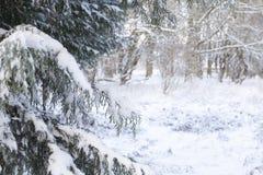 Χιόνι στους κλάδους χειμερινών δέντρων στοκ εικόνα με δικαίωμα ελεύθερης χρήσης