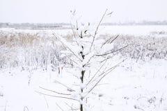 Χιόνι στους κλάδους δέντρων Χειμερινή άποψη των δέντρων που καλύπτονται με το χιόνι Η δριμύτητα των κλάδων κάτω από το χιόνι Χιον Στοκ φωτογραφία με δικαίωμα ελεύθερης χρήσης