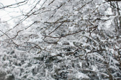 Χιόνι στους κλάδους χιονίζοντας στοκ φωτογραφίες
