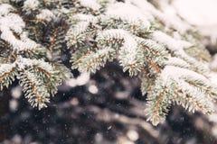 Χιόνι στους fir-tree κλάδους το χειμώνα Στοκ φωτογραφία με δικαίωμα ελεύθερης χρήσης
