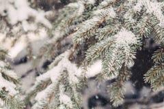 Χιόνι στους fir-tree κλάδους το χειμώνα Στοκ Εικόνες
