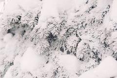 Χιόνι στους fir-tree κλάδους το χειμώνα Στοκ εικόνα με δικαίωμα ελεύθερης χρήσης
