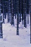 Χιόνι στο έδαφος σε ένα δάσος στοκ εικόνες με δικαίωμα ελεύθερης χρήσης