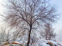 Χιόνι στο δέντρο Στοκ Εικόνα