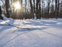 Χιόνι στο δάσος στις ακτίνες του χειμερινού ήλιου Στοκ εικόνα με δικαίωμα ελεύθερης χρήσης