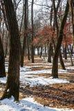 Χιόνι στο δάσος στοκ εικόνες