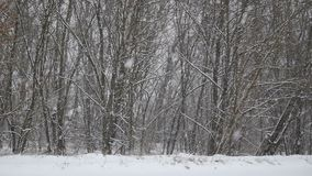 Χιόνι στο δάσος απόθεμα βίντεο