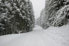 Χιόνι στο δρόμο με το δάσος δέντρων πεύκων Στοκ φωτογραφία με δικαίωμα ελεύθερης χρήσης