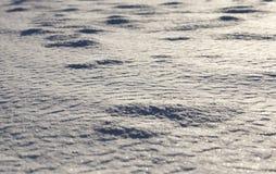 χιόνι στο ηλιοβασίλεμα Στοκ Εικόνα