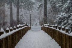 Χιόνι-σφαίρα πάρκων παπιών Στοκ φωτογραφία με δικαίωμα ελεύθερης χρήσης