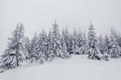 Χιόνι-τα δέντρα έλατου Στοκ εικόνα με δικαίωμα ελεύθερης χρήσης