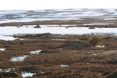 Χιόνι την άνοιξη tundra στοκ φωτογραφία με δικαίωμα ελεύθερης χρήσης