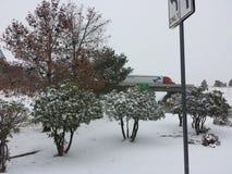 Χιόνι της Αριζόνα Στοκ Φωτογραφία