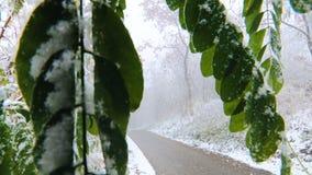 Χιόνι του πρώτου φθινοπώρου απόθεμα βίντεο