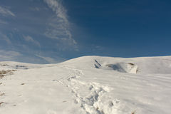 Χιόνι του πρώτου φθινοπώρου Στοκ εικόνες με δικαίωμα ελεύθερης χρήσης
