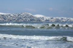 χιόνι τριαντάφυλλων Στοκ Φωτογραφίες