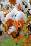 χιόνι φυλλώματος κάτω Στοκ Εικόνες