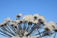χιόνι φυτών Στοκ Εικόνες