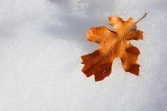 χιόνι φύλλων Στοκ Εικόνες